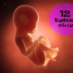 12 tydzień ciąży