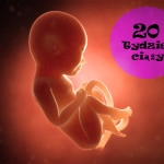 20 tydzień ciąży