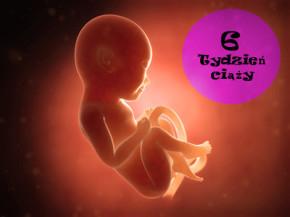 6 tydzień ciąży